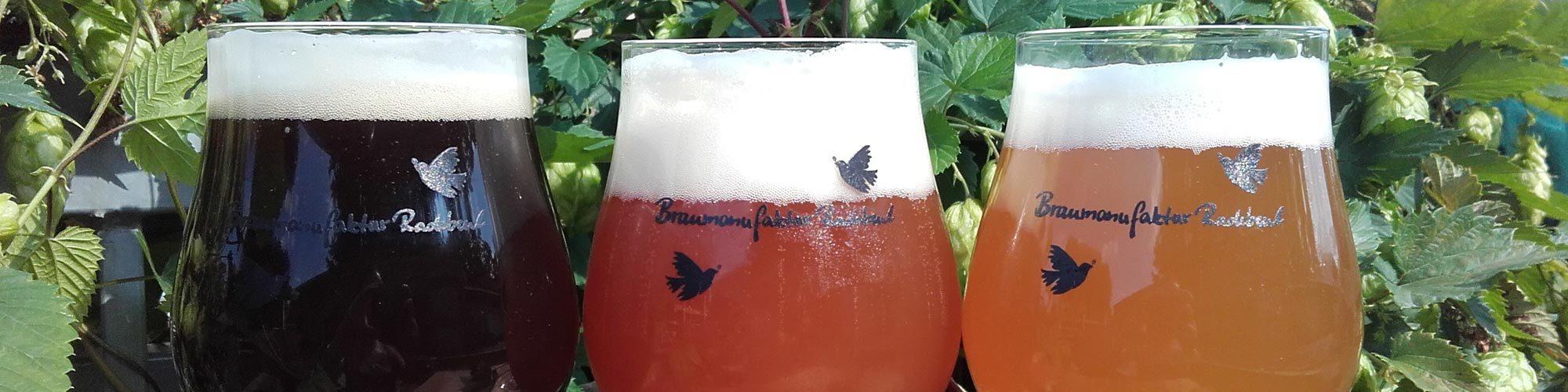 Drei verschiedene Biere in Gläsern vor einer Hopfenpflanze